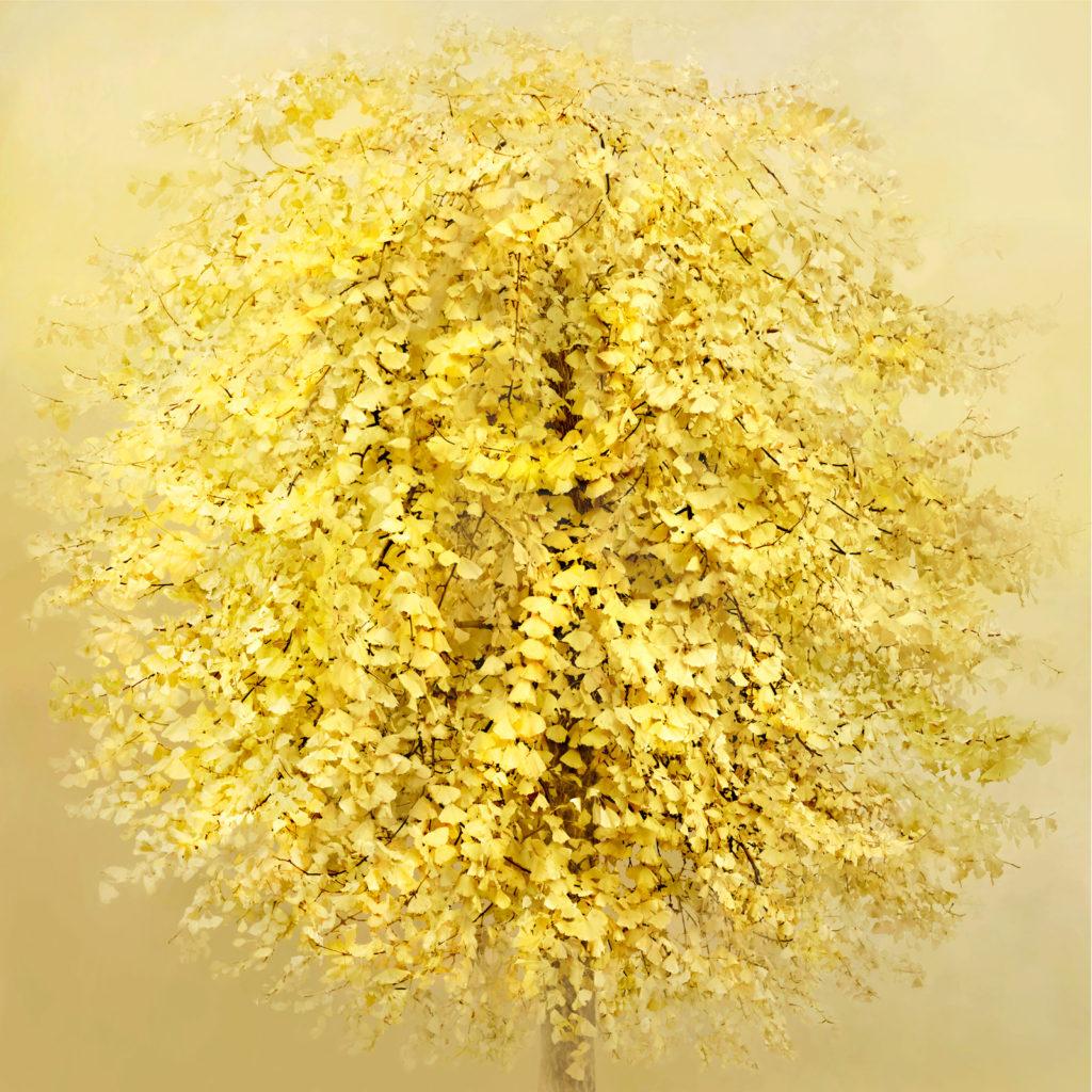 Ginko-tree-100x100cm_sito